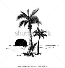 palm tree sketch stock images royalty free images vectors