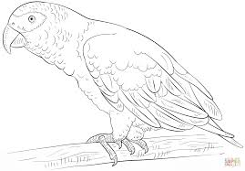 download kakapo animal coloring pages