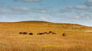 prairie and steppes san diego zoo animals u0026 plants