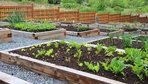 garden ideas zacs garden