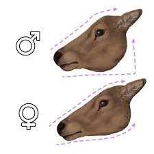 the 25 best how to draw deer ideas on pinterest drawing faces