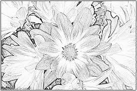 dibujos colorear pintar flores color rosa crisantemo