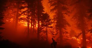Wildfire Shot Drink by Wildfire Outlook Nevada Risk High Through September
