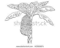 banana tree stock images royalty free images u0026 vectors shutterstock