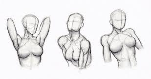 Human Anatomy Upper Body Copy U0027s And Studies Female Upper Body By Hirvios On Deviantart