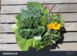 edible green vegetable leaves flowersgarden salad stock photo