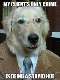 Dog Lawyer Meme - my client s only crime is being a stupid hoe famous dog lawyer