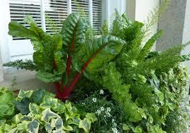 window box garden vegetables home outdoor decoration