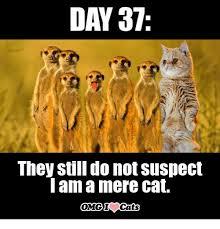 Mere Cat Meme - 25 best memes about cat omg cat omg memes