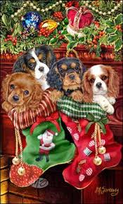 163 best cavalier king charles images on king charles