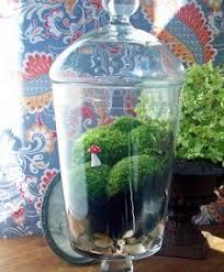 gorgeous metal glass terrarium stands home pinterest