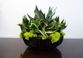 Decorative Plants For Home Landscape Ideas Interior Landscape Design With Bowl Vase Desigin