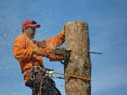 affordable tree service your las vegas tree service experts