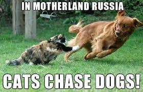 Cat And Dog Memes - cat chasing dog meme on imgur