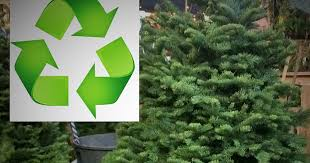 how to recycle your christmas tree in san francisco lostinsf