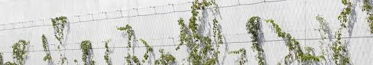 Stainless Steel Cable Trellis Green Walls