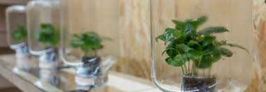 self watering plants these maintenance free self watering plants use biomimicry to