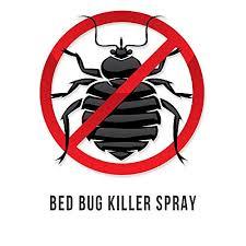 lights out bed bug killer lights out bed bug killer spray all natural organic formula eco