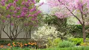 design tips for blooming trees and shrubs