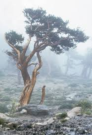 file fog on the tree line in the rocky mountain national park jpg