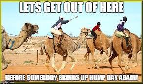 Camel Meme - hump day camel meme images also mod