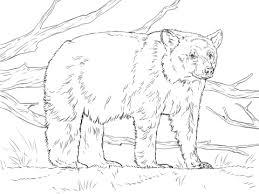 realistic american black bear coloring free printable