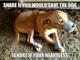 Sad Animal Memes - please please please don t do this to these poor animals a life