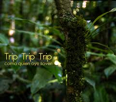 Triptrip by Trip Trip Trip Firma Con El Sello Willowhayne Triptriptrip