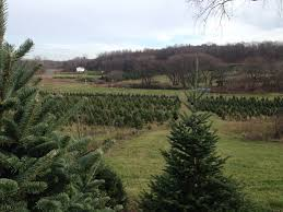three b tree farm