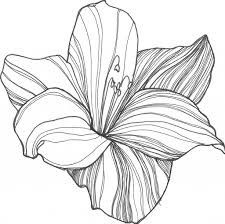flower pictures to draw flower to draw easy drawing artisan