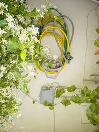 Plants To Grow Indoors Jasmine How To Grow Indoors The Old Farmer U0027s Almanac