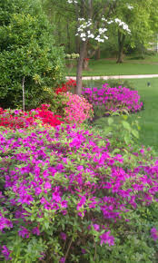 121 best trees and bushes images on pinterest flowers flower