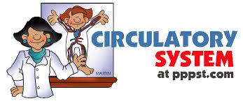 free powerpoint presentations about human circulatory system for