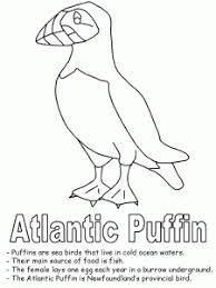 coloring pages puffin coloring page animals kindergarten pages
