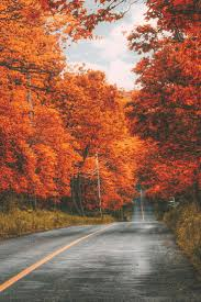 Fall Autumn by 79 Best Love Fall U003c3 Images On Pinterest Fall Autumn Leaves And