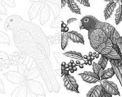 parrot colouring etsy