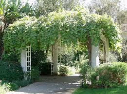 Climbing Plants On Trellis 10 Reasons You Should Be Growing Grapes In Your Backyard Monrovia