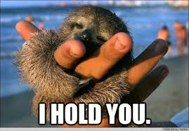 Funny Sloth Memes - i hold you cute baby sloth quickmeme