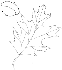 template of leaves coloring home