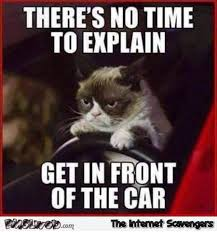 Grumpy Cat Meme Pictures - get in front of the car grumpy cat meme pmslweb