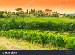 typical tuscany stone house vineyard chianti stock photo 230998399