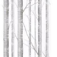 birch wallpaper best hd wallpaper