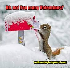 Cute Valentines Day Memes - animal capshunz valentines day funny animal pictures with