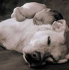 american pitbull terrier jaw the great american pitbull terrier kupika com