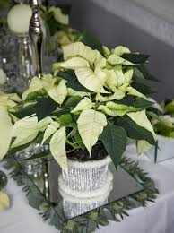 decorate with 45 ideas poinsettias the holidays most