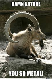Fucking Awesome Meme - nubian ibex s are fucking awesome by likeaboss meme center