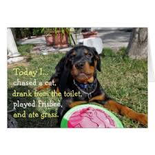 rottweiler greeting cards zazzle