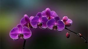purple orchid flower purple orchid flowers orchid flower set of image collection