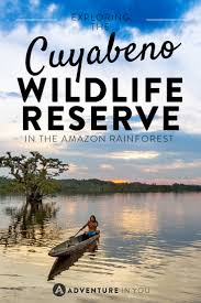 cuyabeno wildlife reserve exploring the amazon rainforest