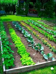 Best Vegetable Garden Layout Garden Layouts Coryc Me